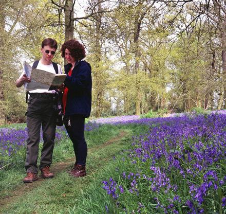 Blickling Woods in Norfolk